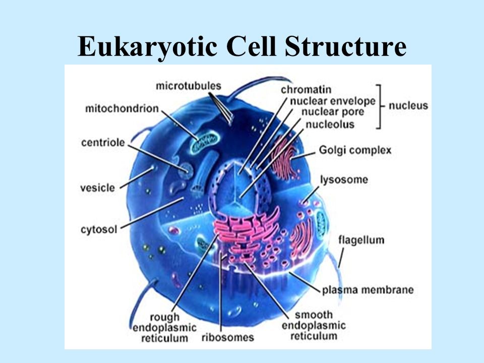 Anatomy & Physiology Cell Structure & Function Quiz