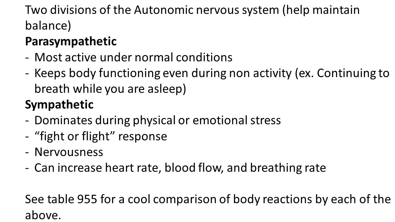 Two divisions of the Autonomic nervous system (help maintain balance)