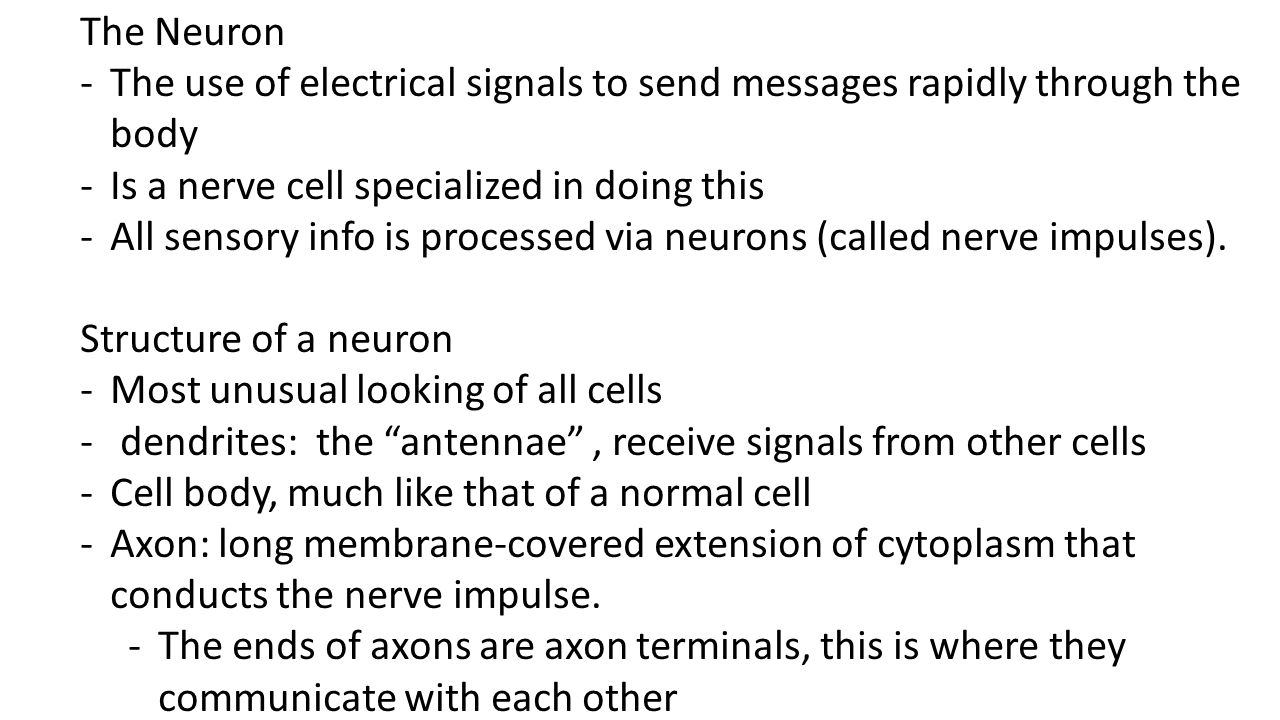 The Neuron The use of electrical signals to send messages rapidly through the body. Is a nerve cell specialized in doing this.