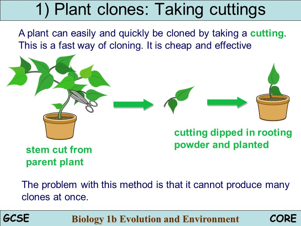 Cloning Ppt Video Online Download