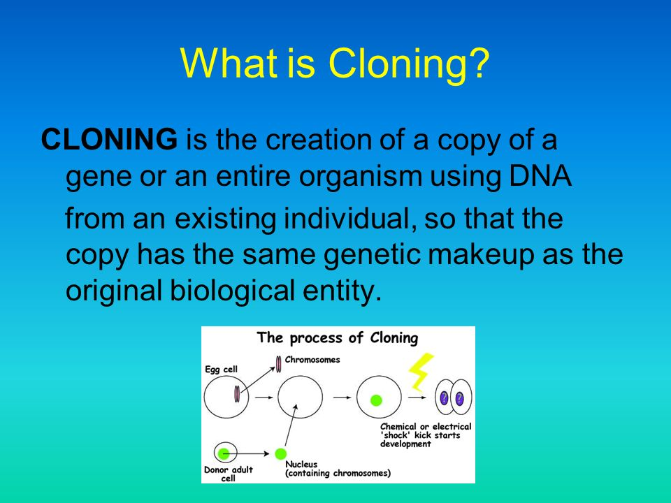 an analysis and an introduction to the cloning of human Human cloning outline i introduction a why is cloning controversial  ii body a article analysis: should human cloning ever be permitted.