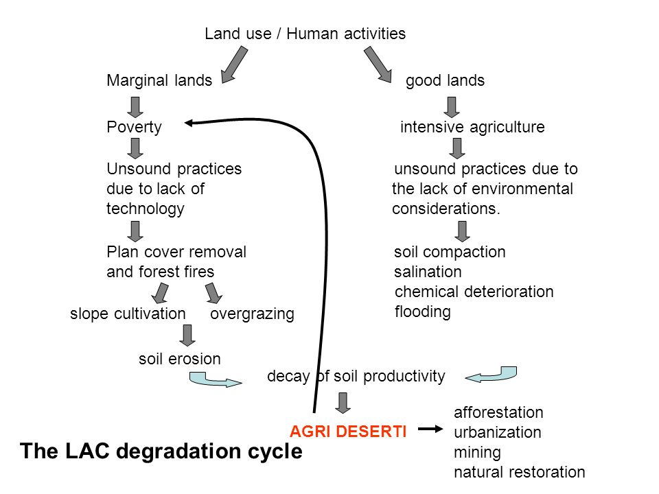 The LAC degradation cycle
