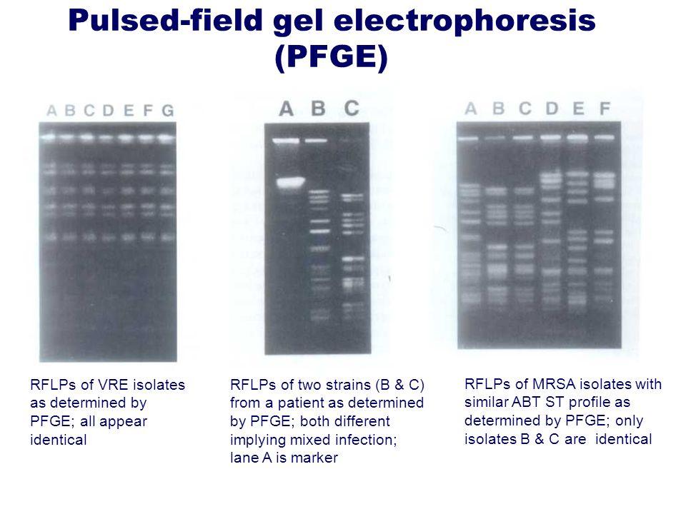Pulsed-field gel electrophoresis (PFGE)