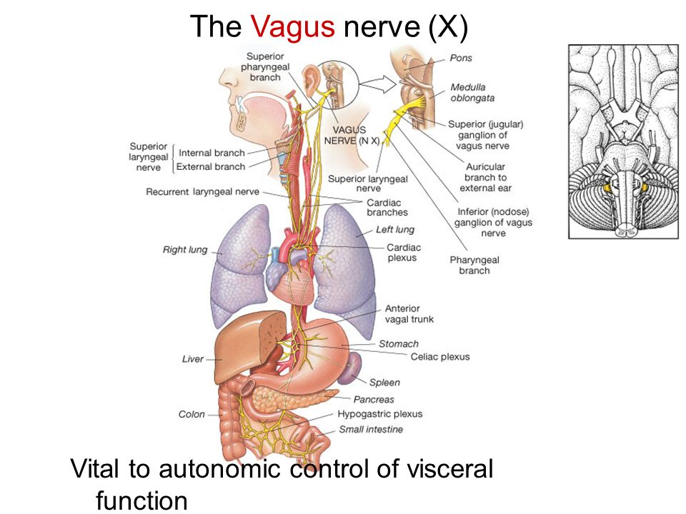 vagal meaning in hindi