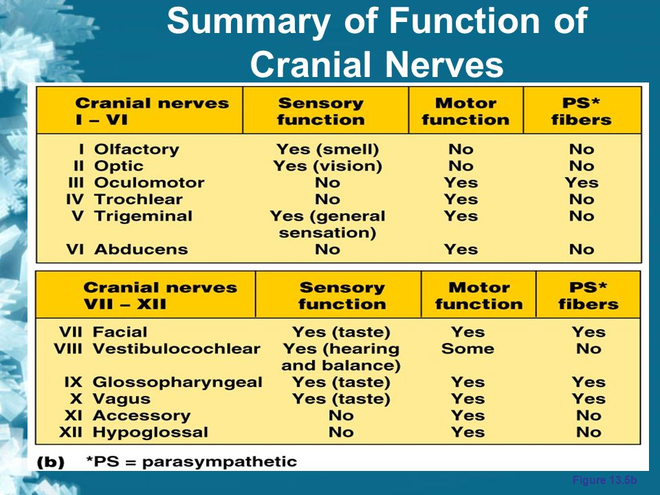 cranial nerves lab Read now laboratory report 25 brain and cranial nerves free ebooks in pdf format - solid fun math answer key section 3.