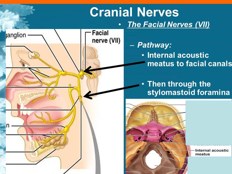 BIO 210 LAB Practicum and Lecture 4 Cranial Nerves