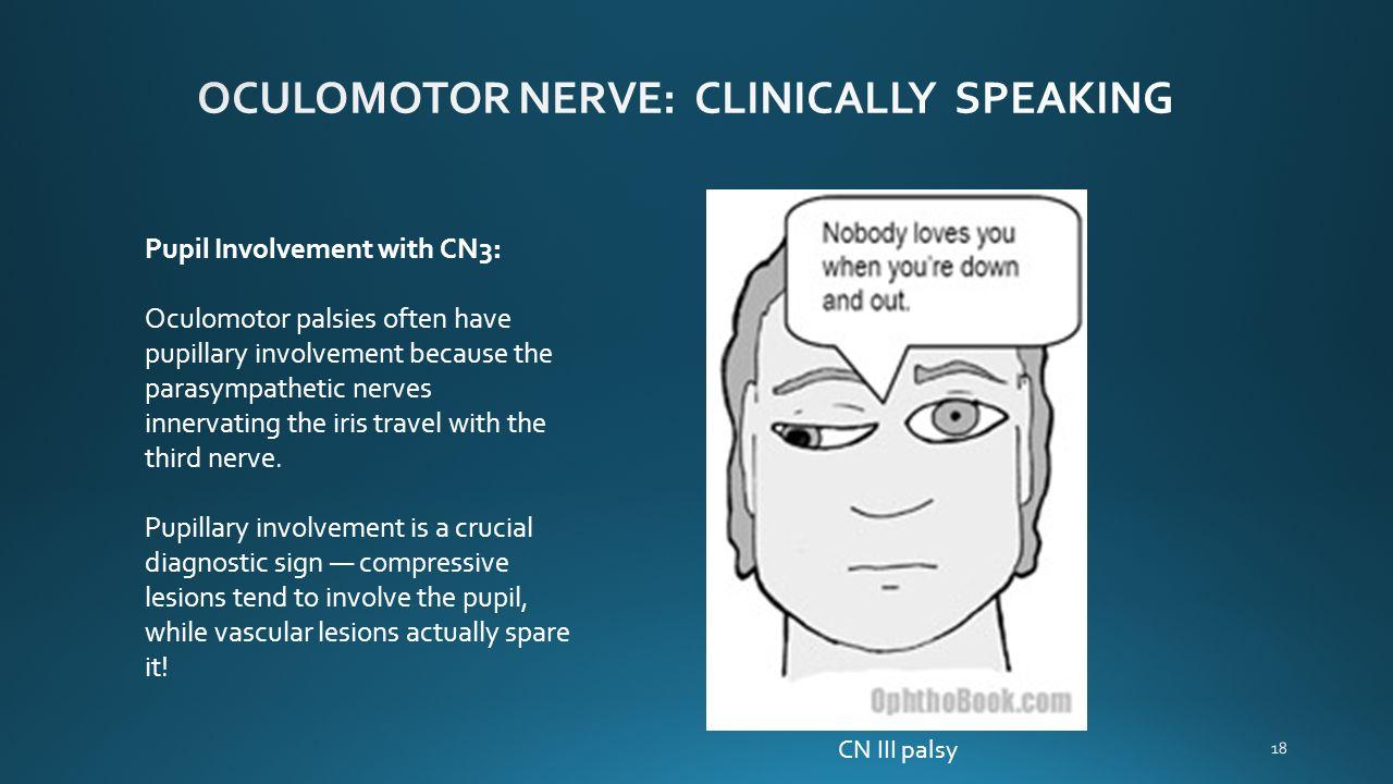 CRANIAL NERVES Bundles of sensory or motor fibers that ...  CRANIAL NERVES ...