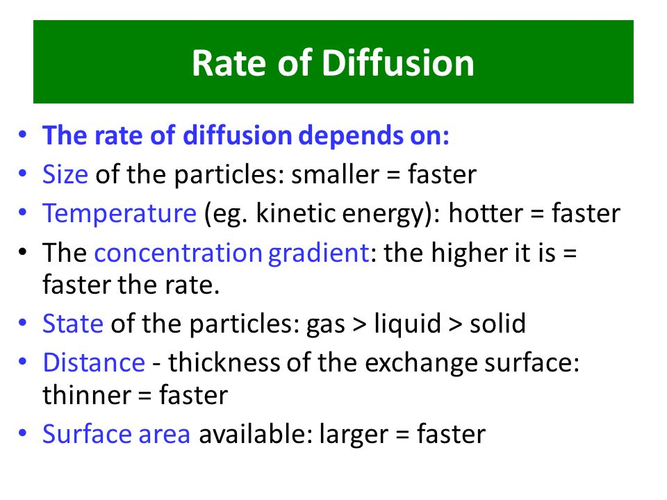 Effect of surface area on rates of diffusion in plant cells