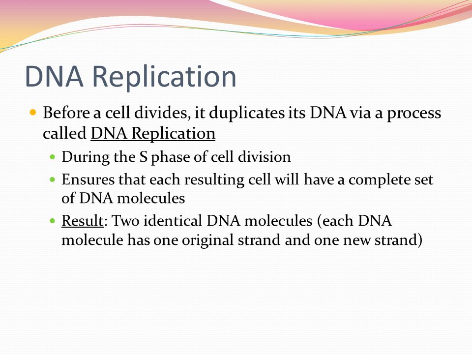Cell growth and replication ppt video online download for Explain how dna serves as its own template during replication