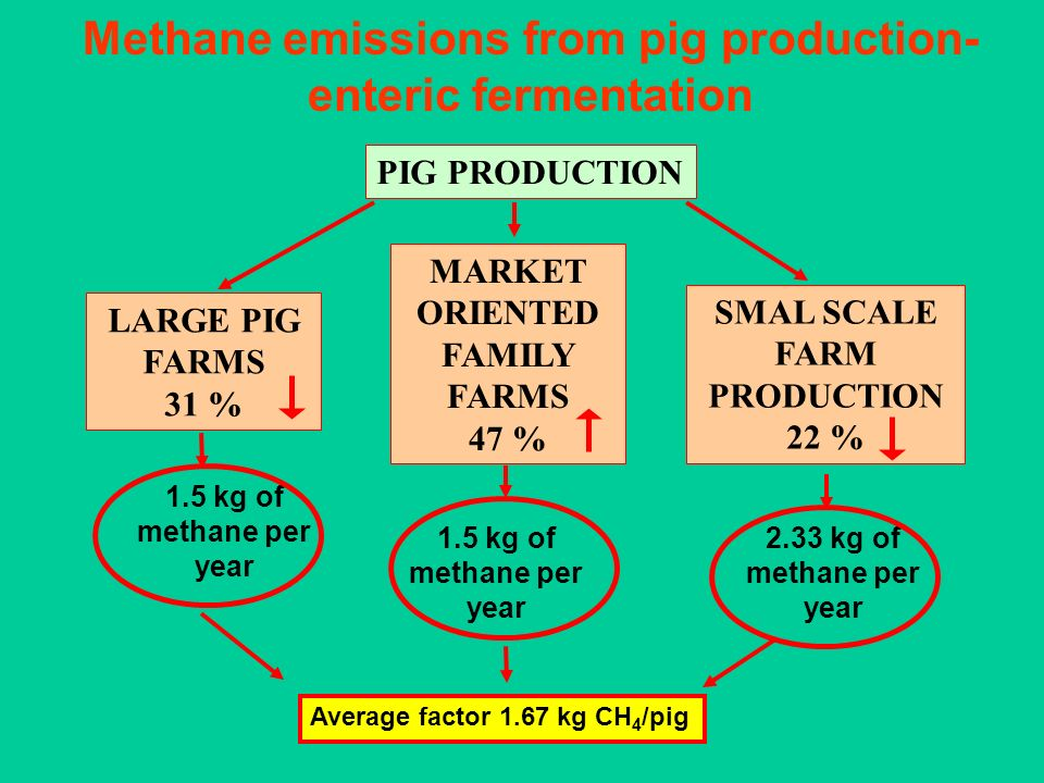 Methane emissions from pig production- enteric fermentation