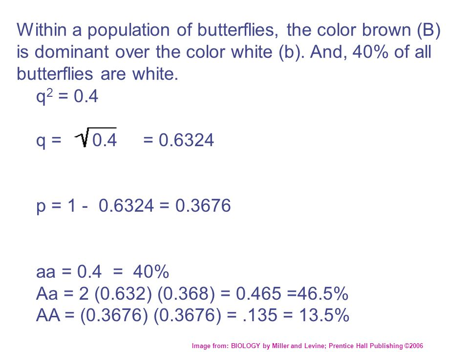 Within a population of butterflies, the color brown (B) is dominant over the color white (b). And, 40% of all butterflies are white.