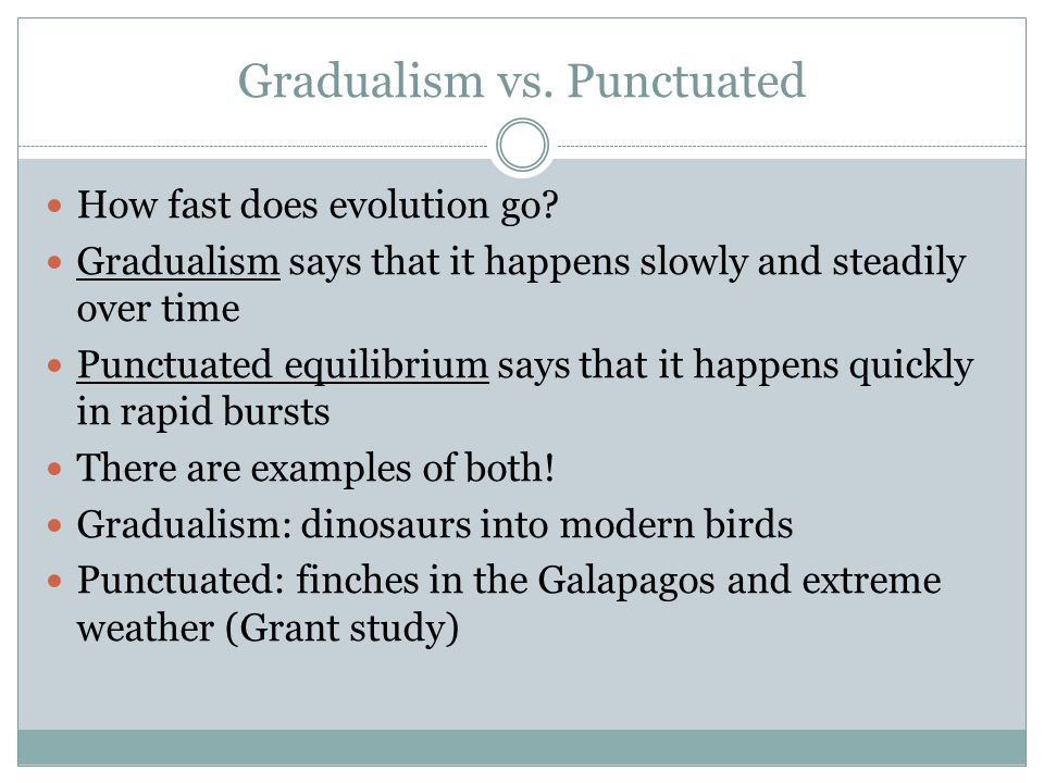 gradualism versus punctuationism Stasis at corcyra the essay about gradualism versus punctuationism - gradualism versus punctuationism although modern evolutionists are thought to be.