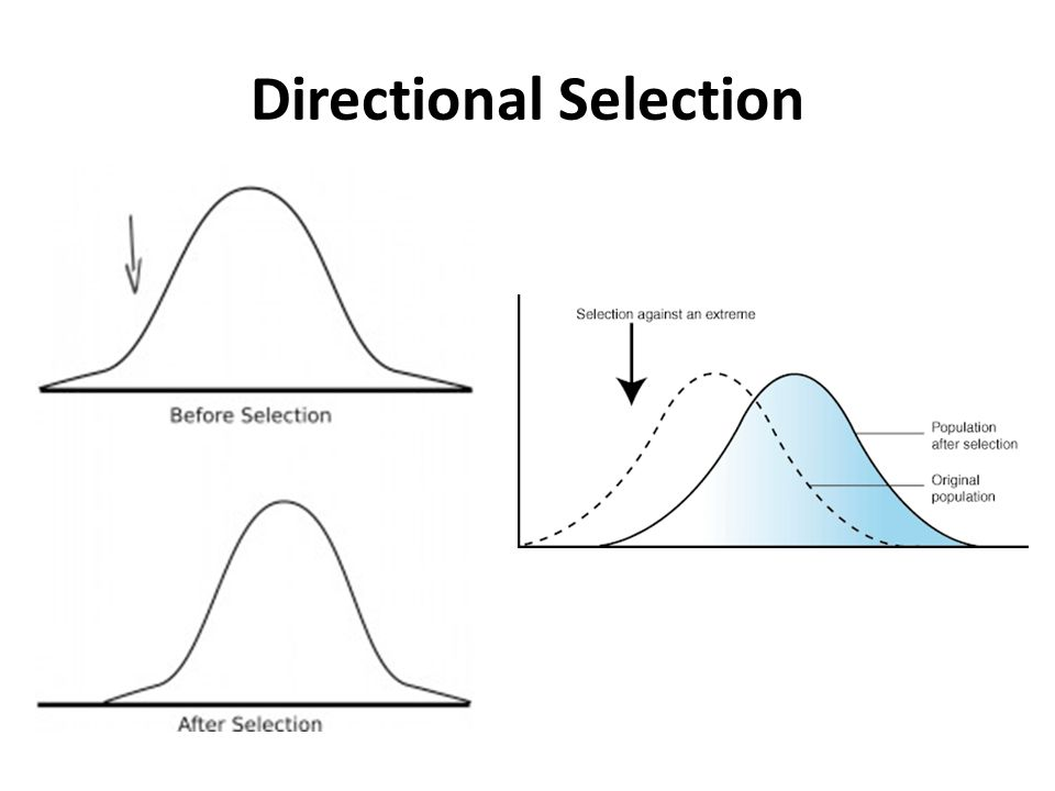 Directional Selection In Natural Selection