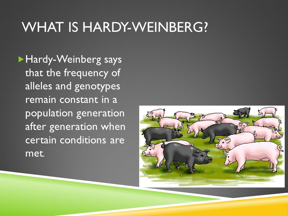 What is Hardy-Weinberg