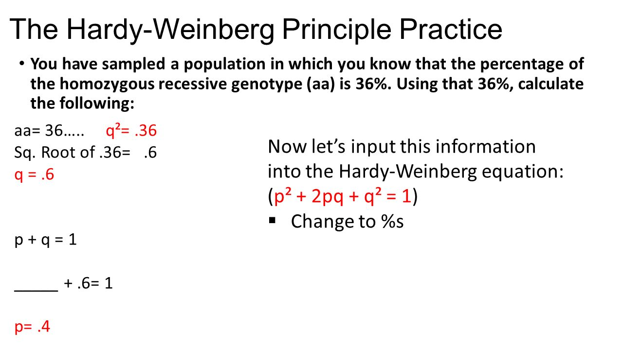 Hardy Winebergg Questions