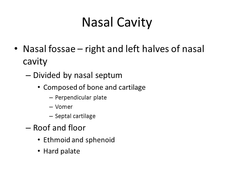 The respiratory system ppt download for Floor of nasal cavity
