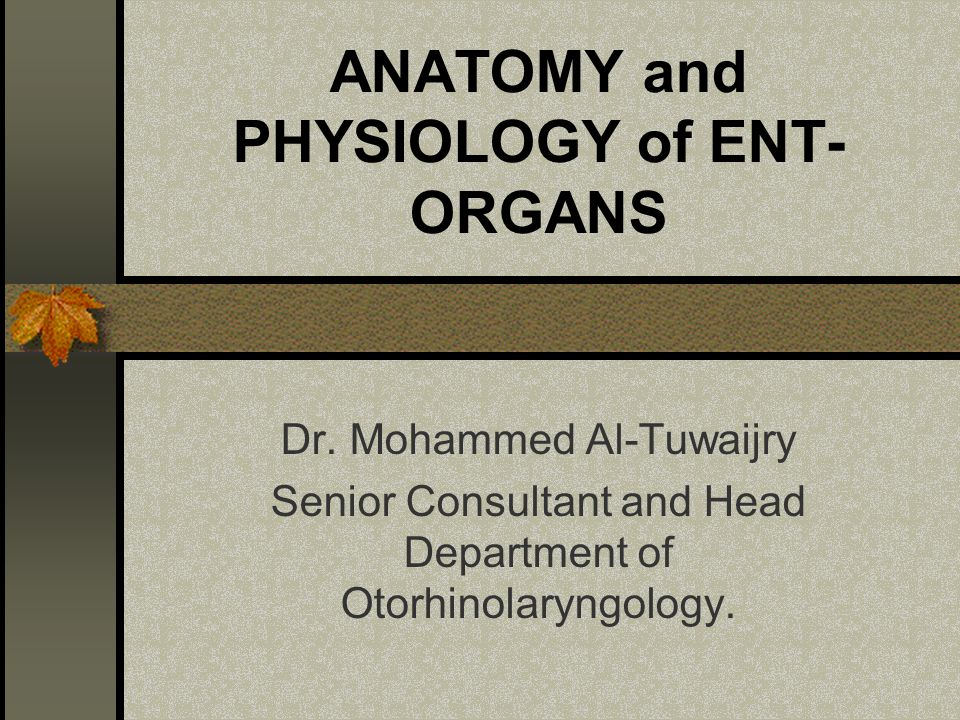 Anatomy And Physiology Of Ent Organs Ppt Video Online Download