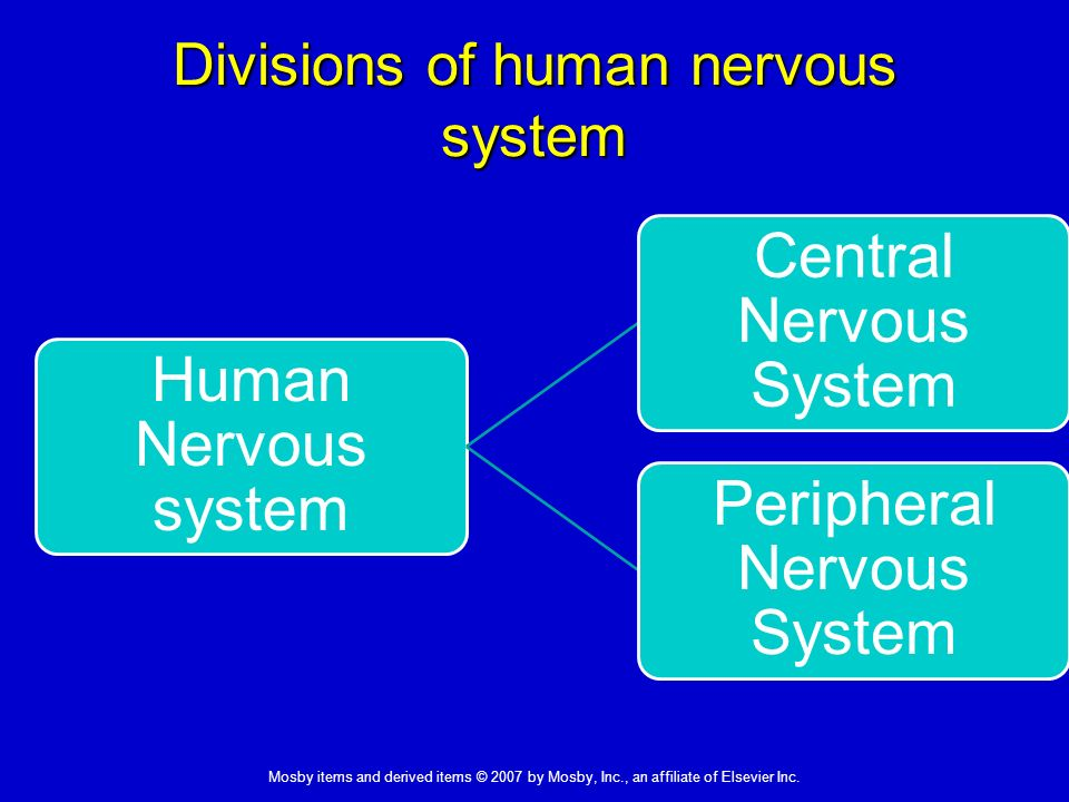 drugs affecting the central nervous system Studies of the actions of drugs affecting the central nervous system and of the  relationship between nerve terminal atpase activities and neurotransmitter.