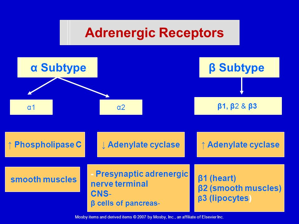 receptors in intestinal muscles Characterization of angiotensin receptors in vascular and intestinal smooth muscles w k  it is suggested that receptors for at ii in intestinal and vascular.