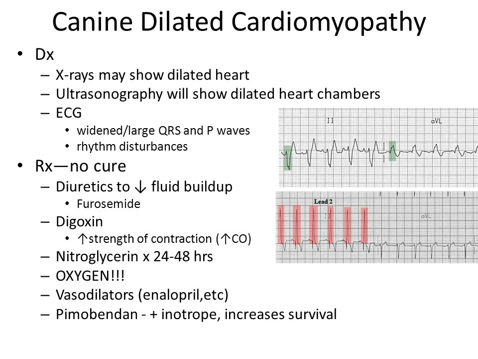 Cardiorespiratory Diseases Ppt Download