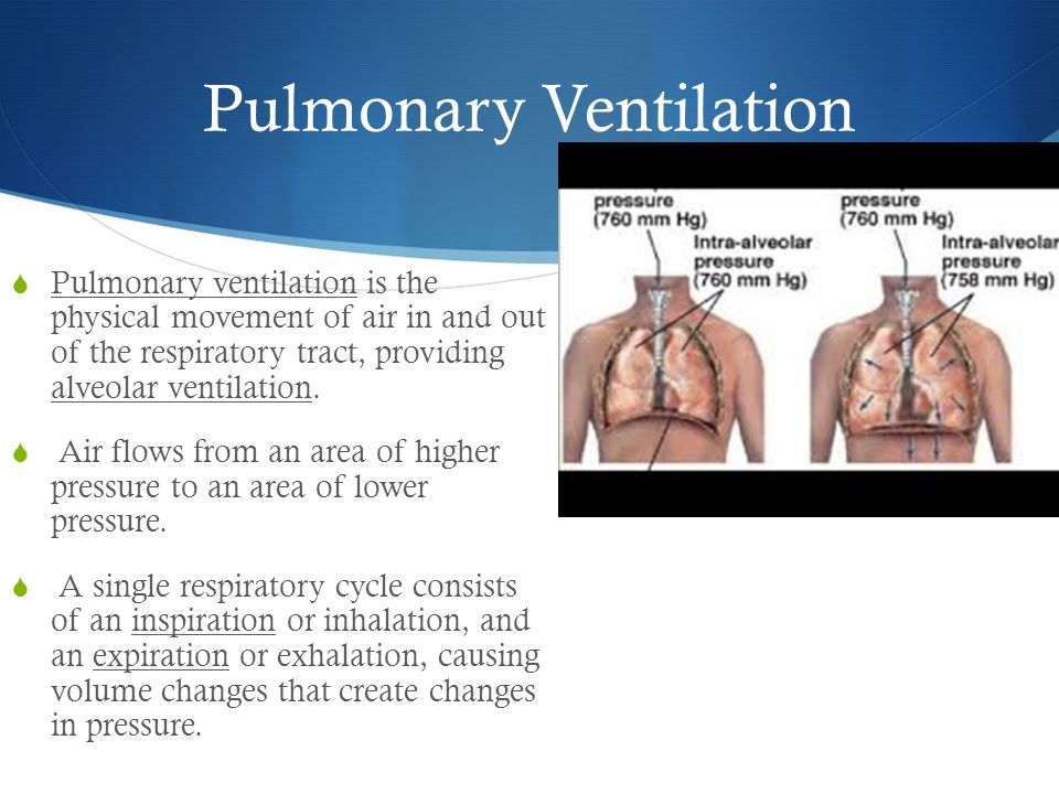The Respiratory System Ppt Video Online Download