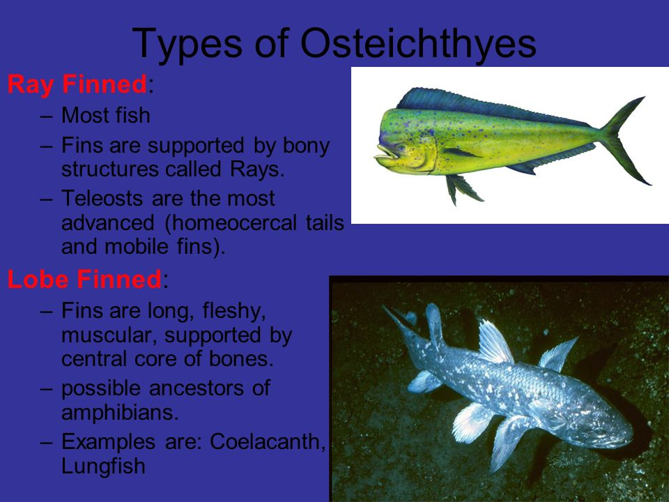 Fish ppt download for Examples of fish