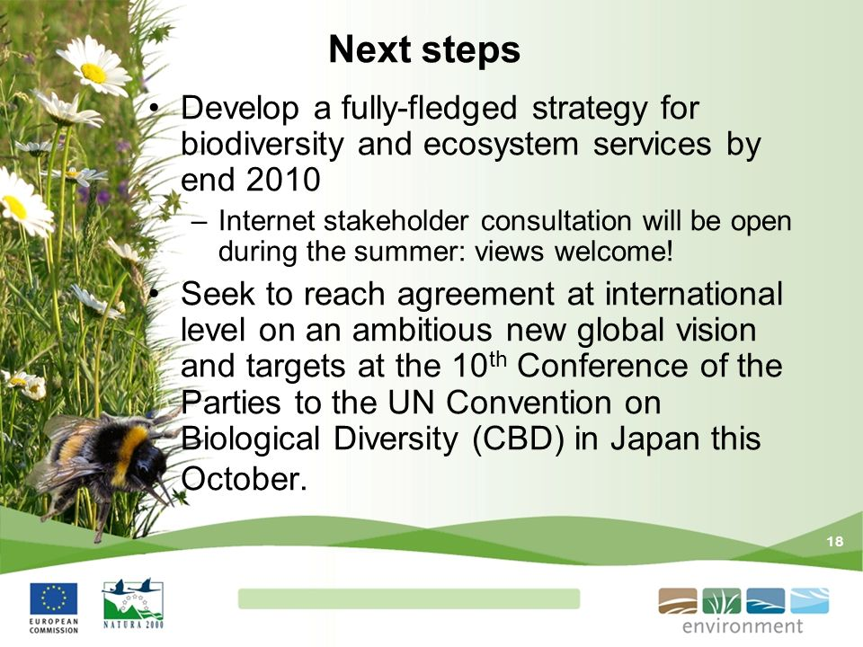 Next steps Develop a fully-fledged strategy for biodiversity and ecosystem services by end 2010.