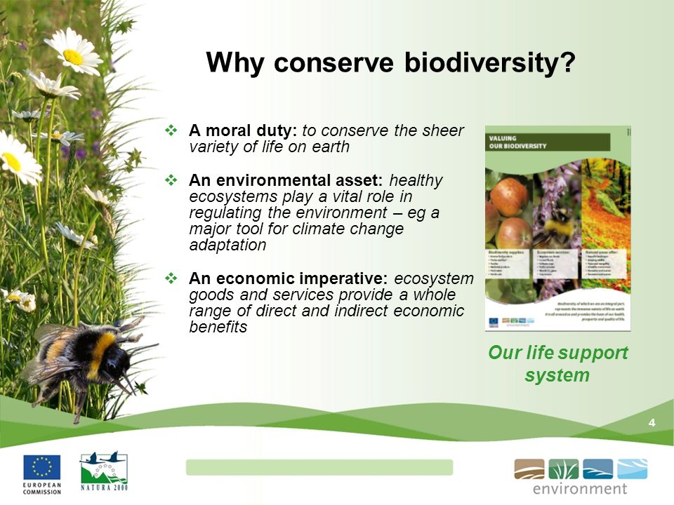 Why conserve biodiversity