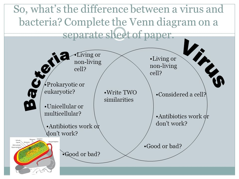 the difference between bacteria