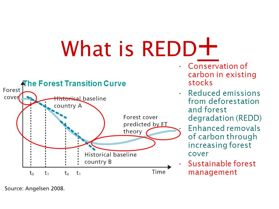 What is REDD+ Conservation of carbon in existing stocks