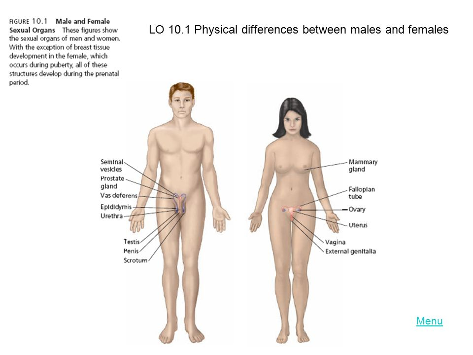 LO 10.1 Physical differences between males and females
