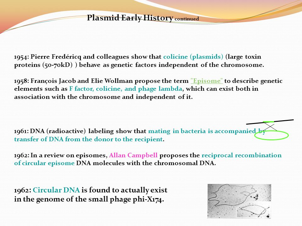 plasmids chromosomal dna molecules The most important differences between dna in chromosomes and plasmids lie in and chromosomal dna in the difference between genomic dna.