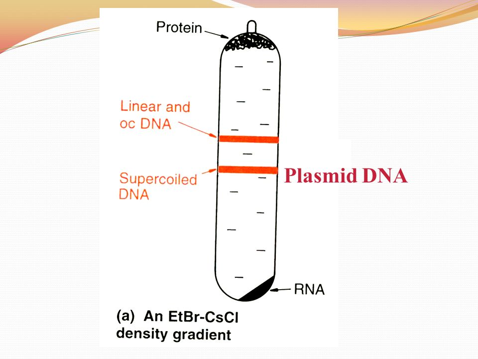 an analysis of molecular cloning experiment One method of isolation and amplification of a gene of interest is to clone the   further analysis revealed that phage λ had short regions of single-stranded dna .