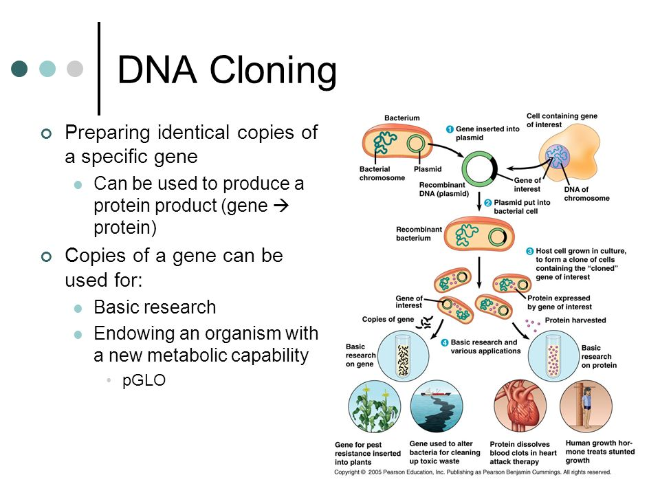DNA Cloning Preparing identical copies of a specific gene