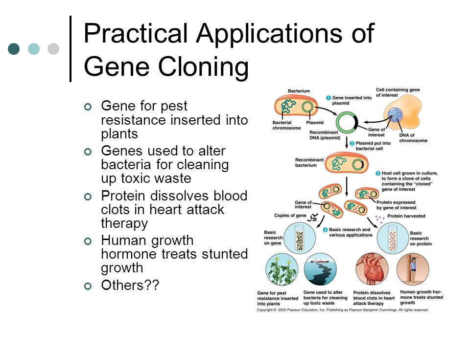 Practical Applications of Gene Cloning