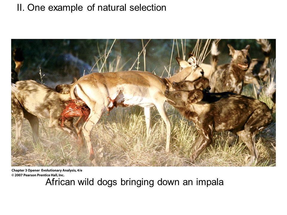 Darwinian Natural Selection Motivation Most powerful mode of ...