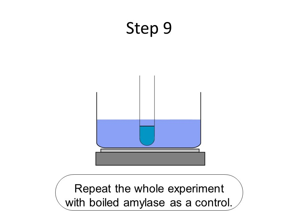 Repeat the whole experiment with boiled amylase as a control.