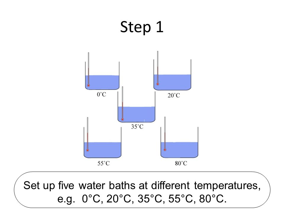 Step 1 Set up five water baths at different temperatures, e.g. 0°C, 20°C, 35°C, 55°C, 80°C.