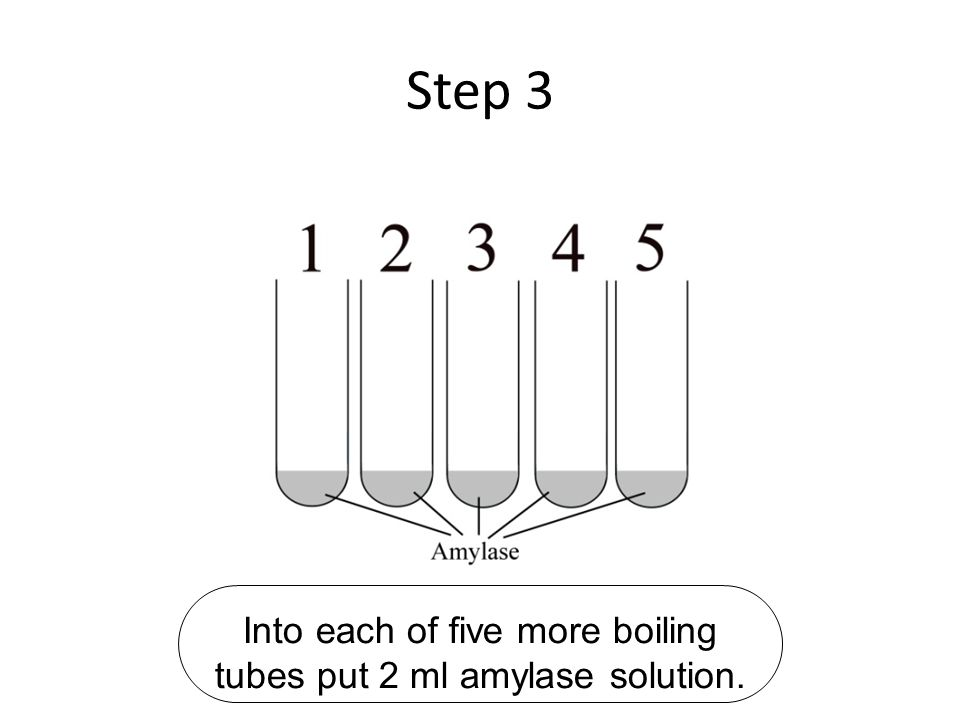 Into each of five more boiling tubes put 2 ml amylase solution.