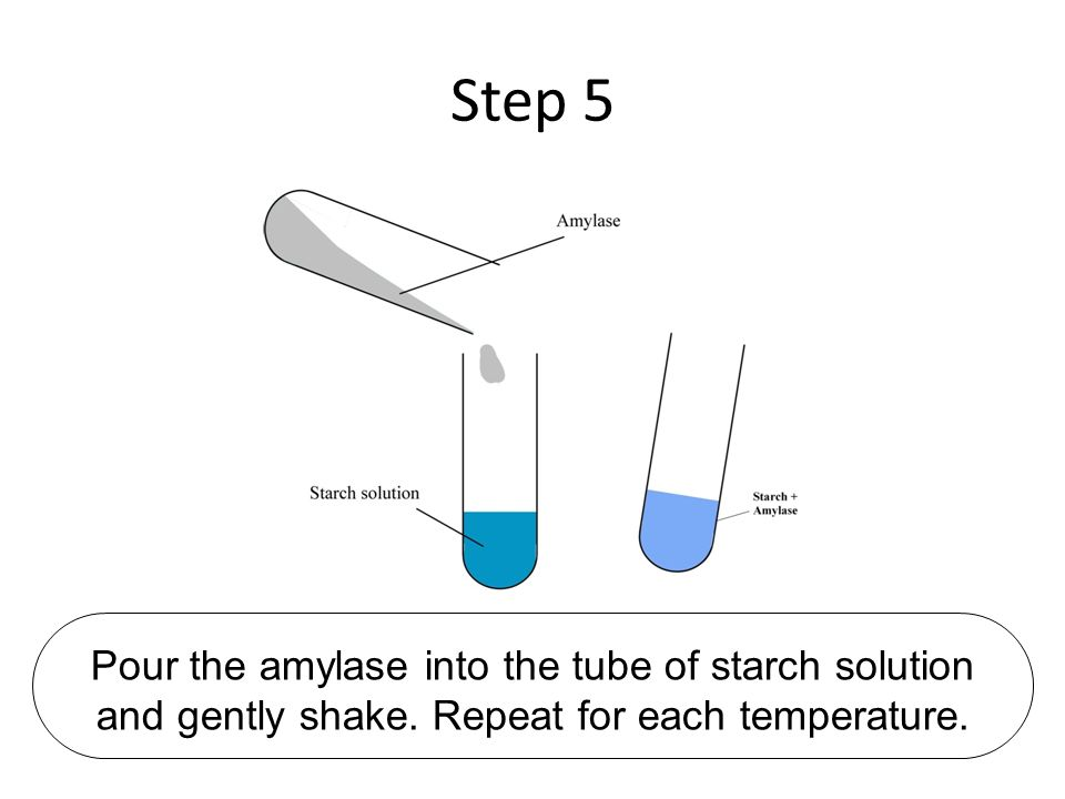 Step 5 Pour the amylase into the tube of starch solution and gently shake.
