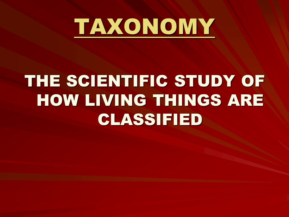 scientific study of how living things are classified