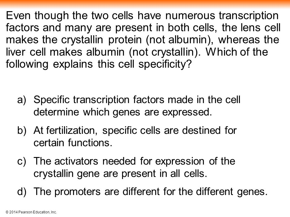 Even though the two cells have numerous transcription factors and many are present in both cells, the lens cell makes the crystallin protein (not albumin), whereas the liver cell makes albumin (not crystallin). Which of the following explains this cell specificity