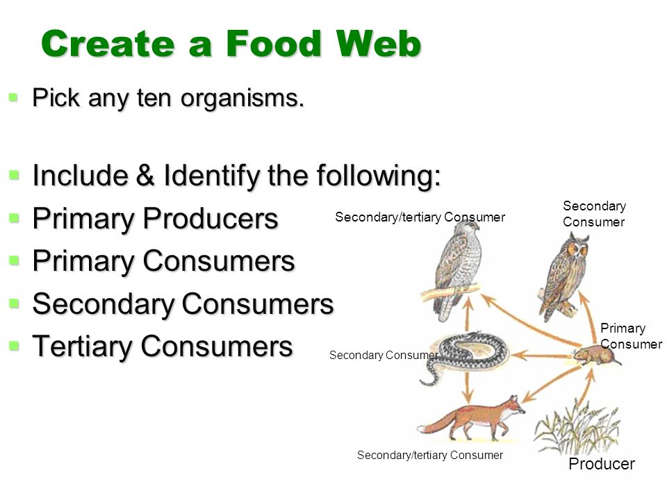 Ecology. - ppt download