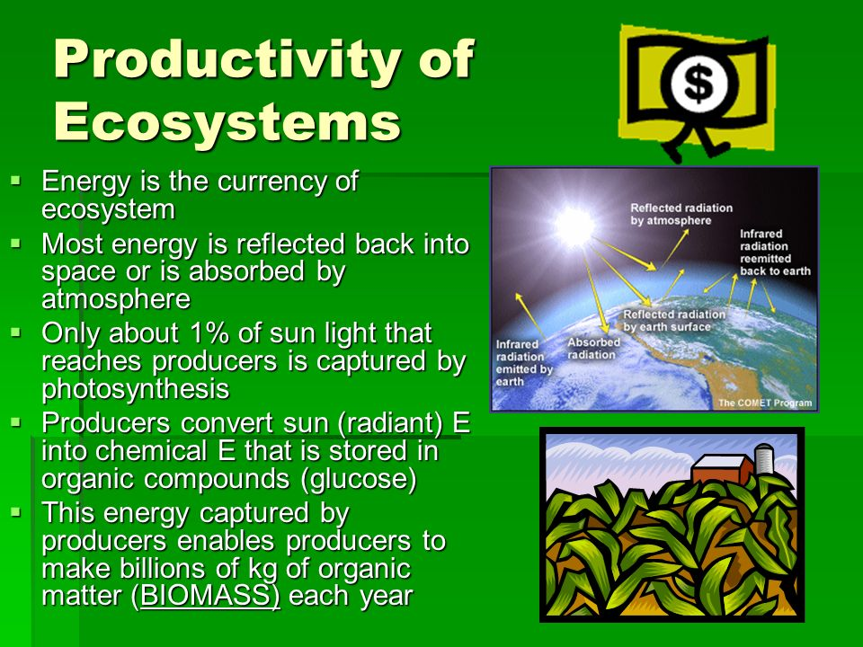 ENERGY and ECOLOGY: Ecological Pyramids. - ppt download
