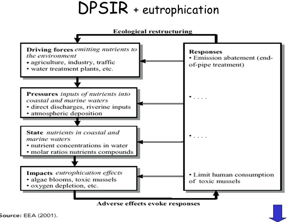 DPSIR + eutrophication