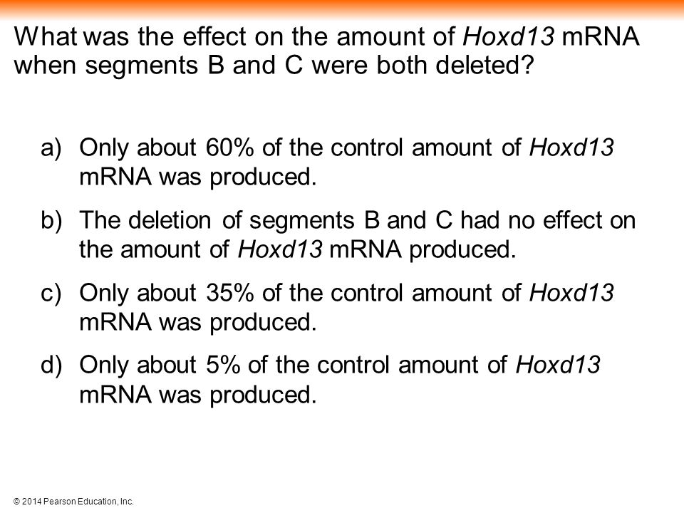 What was the effect on the amount of Hoxd13 mRNA when segments B and C were both deleted
