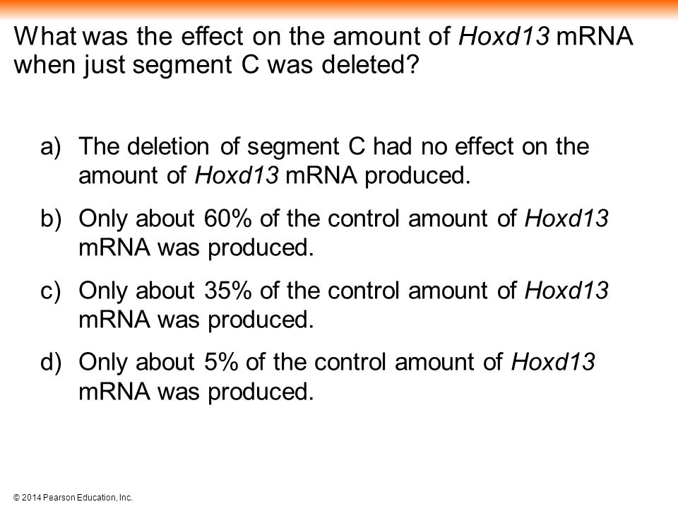 What was the effect on the amount of Hoxd13 mRNA when just segment C was deleted