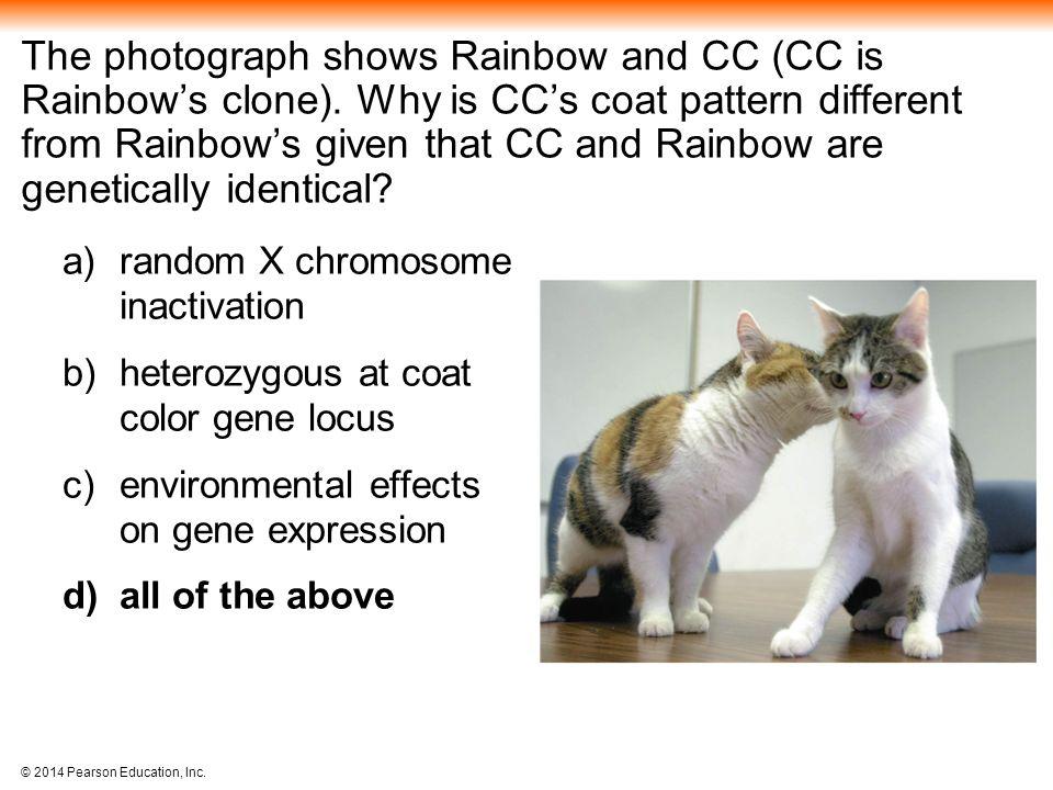 The photograph shows Rainbow and CC (CC is Rainbow's clone)