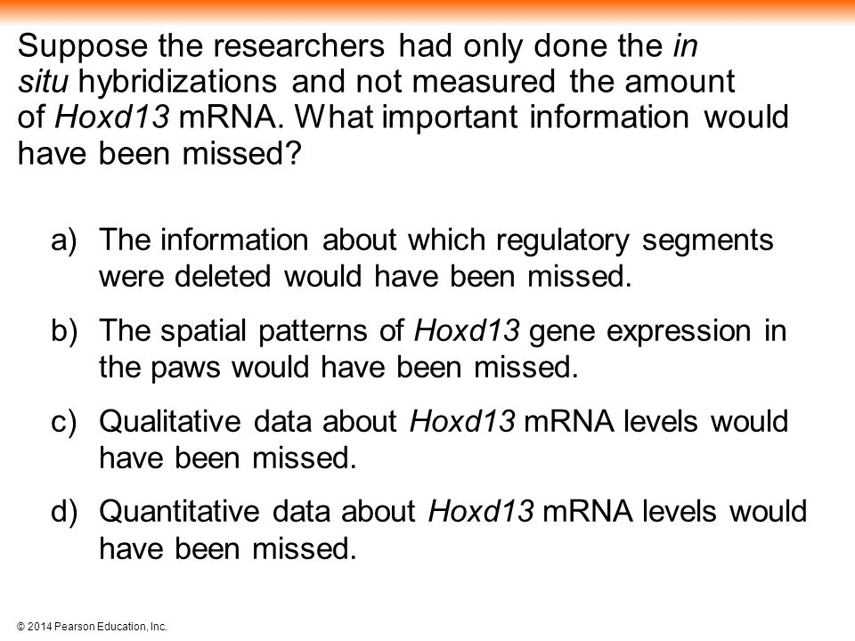 Suppose the researchers had only done the in situ hybridizations and not measured the amount of Hoxd13 mRNA. What important information would have been missed