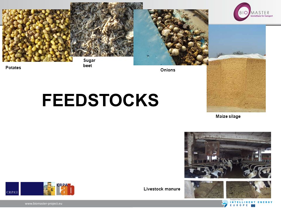 Sugar beet Potates Onions FEEDSTOCKS Maize silage Livestock manure 23